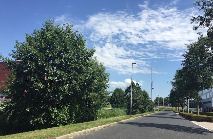 Bomen kappen Barendrecht