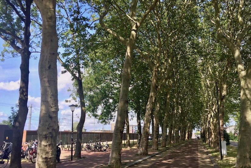 Bomen kappen Maassluis