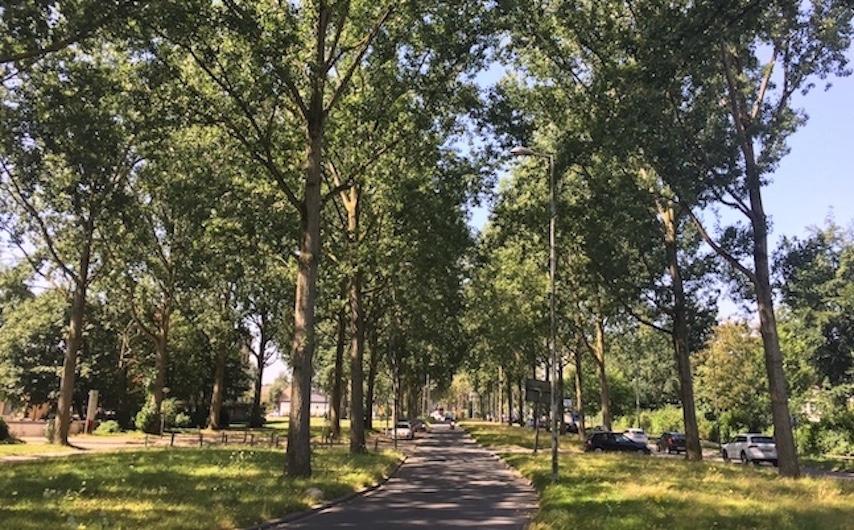 Bomen kappen Rotterdam