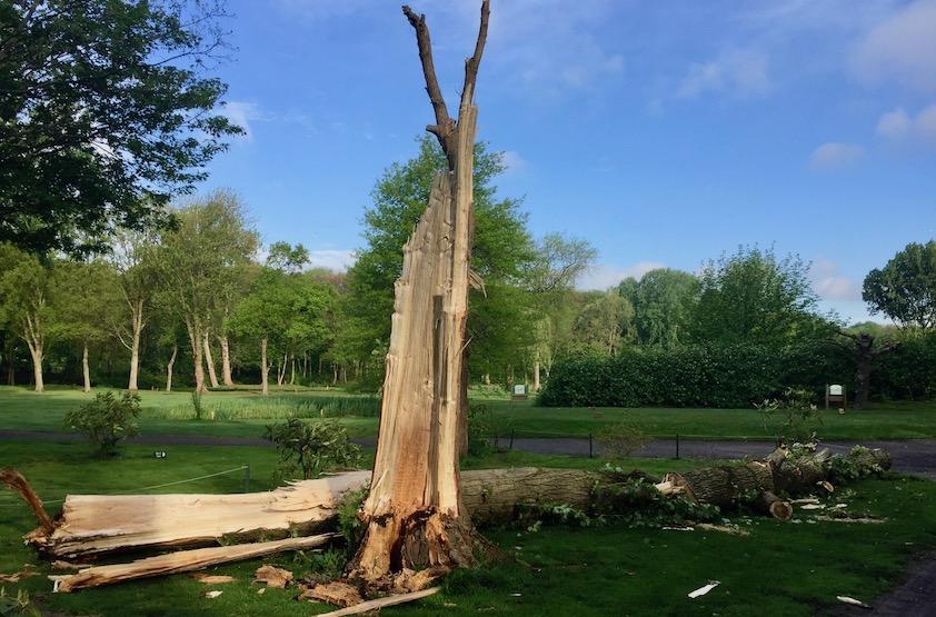 Wie bellen bij een omgevallen boom in Rotterdam